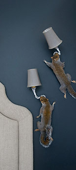 The Squirrel Wall Lamp